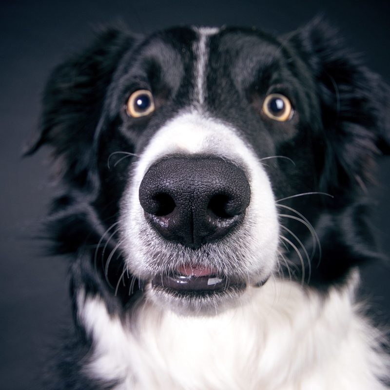 dog-2286773
